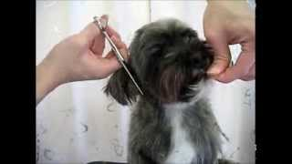 mongrel dog Grooming MIX犬のカット トリマーの卵さん達へ(For beginne...