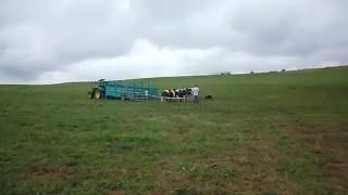 approche de la bétaillère