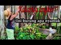 Pikat Burcil Dan Trucukan Di Bawah Pohon Beringin Dengan Trucukan Ribut  Mp3 - Mp4 Download