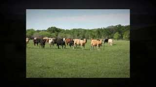 Texas Cattle Ranches, Hunting Ranches And Horse Ranches For Sale