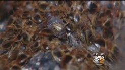 Bed Bug Prevention Method Developed In Pennsylvania Seeing Positive Results