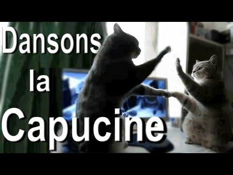 DANSONS LA CAPUCINE  PAROLE DE CHAT