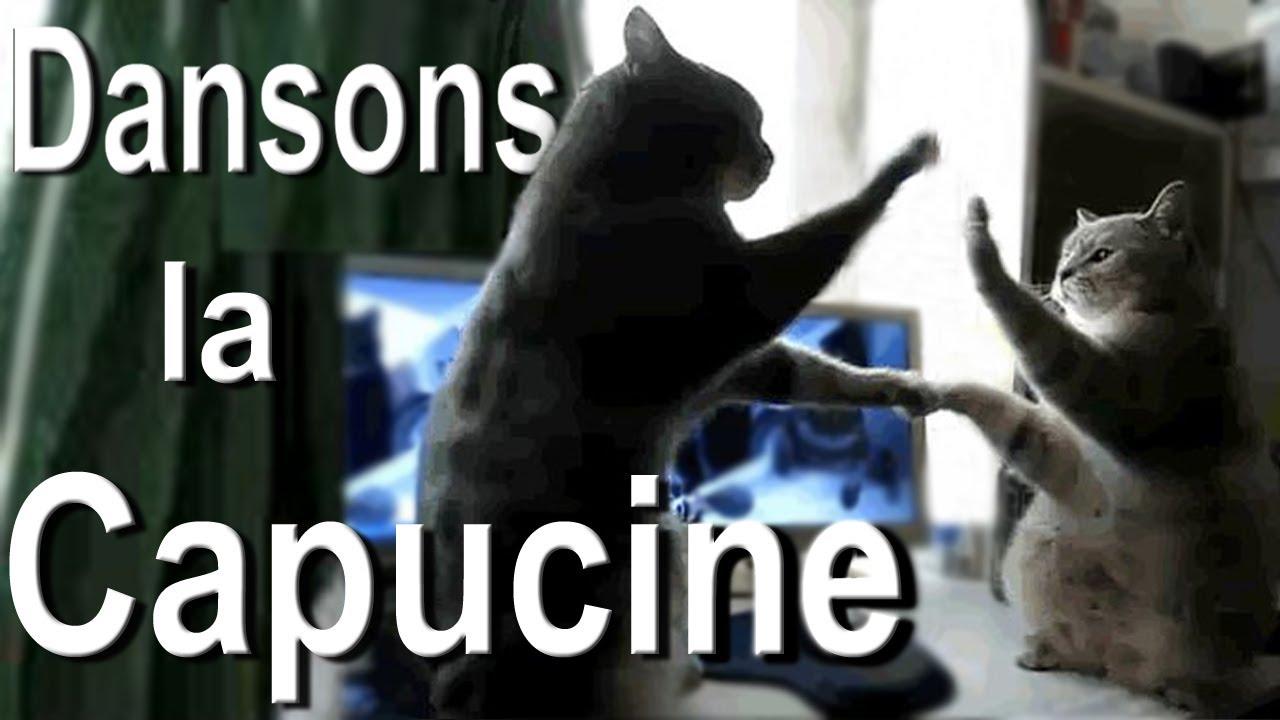 DANSONS LA CAPUCINE , PAROLE DE CHAT
