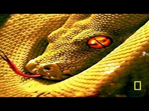 Animal Documentary National Geographic - THE SECRET LIFE OF SNAKES [Classic Documentary!]