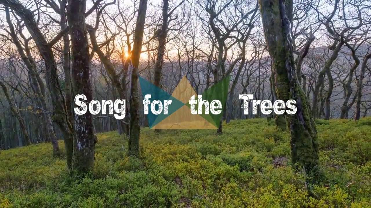Song for the Trees // Sounds Like Reign (Lyric Video)
