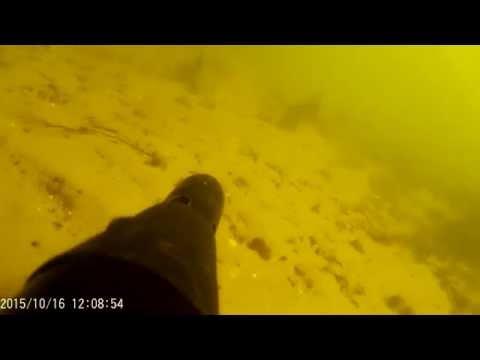 Подводная охота(р.Десна)#2 СОМ