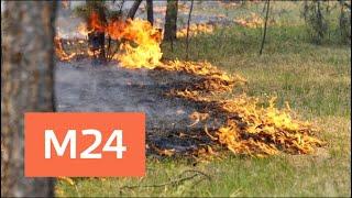 Смотреть видео Синоптики предупредили о возможных пожарах из-за жары - Москва 24 онлайн