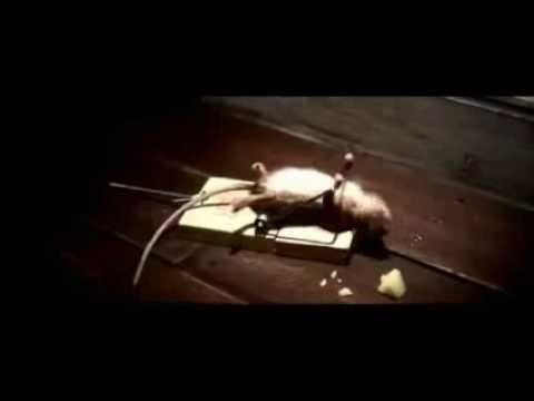Funny Mouse Trap Cheese Commercial (No animal abuse)
