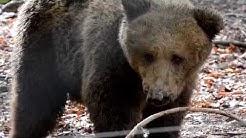 Dancing Bear Park Belitsa - Official Documentary
