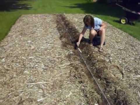 Back To Eden Planting Corn Youtube