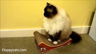 Cardboard Cat Scratcher Imperial Cat Santa Sleigh - ねこ - ラグドール - Floppycats