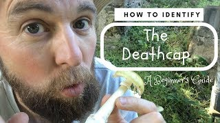 How To Identify The Deathcap: A Beginner