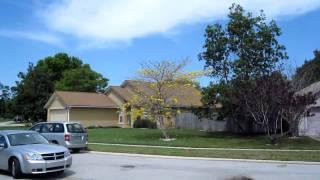 № 164 ША  Гараж сэйл и птицы Русские в Орландо Флорида