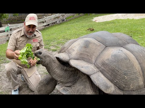 Download 104 YEAR OLD TORTOISE 🐢