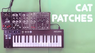 Behringer Cat Sound Demo and Patch Tutorial (No Talking)