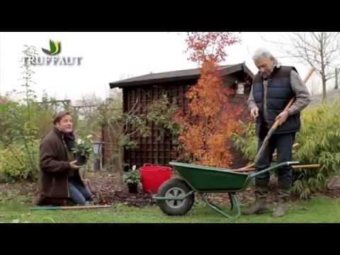 Calendrier De Jardinage De Décembre - Jardinerie Truffaut TV