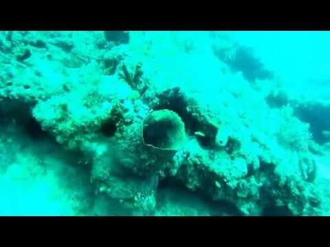 Padi Merritt Island Dive, Pompano Beach Fl