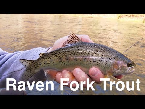 Trout Fishing Cherokee's Raven Fork