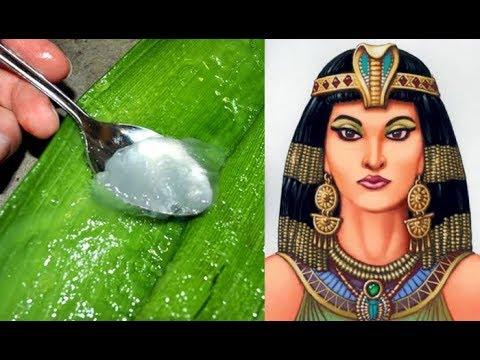 Why Cleopatra & Nefertiti used Aloe vera as part of their beauty regimes