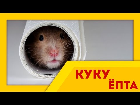 СМЕШНЫЕ ХОМЯКИ l Самое смешное видео