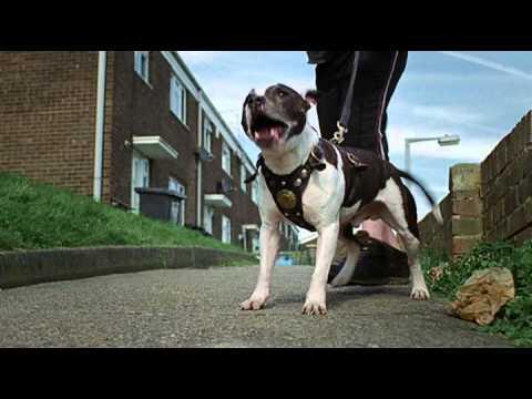 The Freeview HD Corgi Advert - 60 seconds