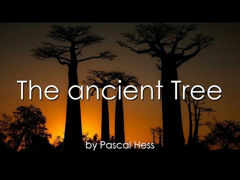 the-ancient-tree-❤️-loveletter-background-song-by-brother-pascal-❤️