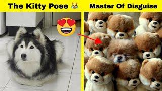 Happy Dog Photos