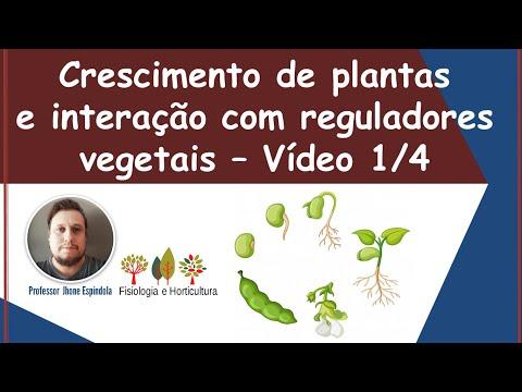 crescimento-de-plantas-e-interação-com-reguladores-vegetais---fisiologia-vegetal:-hormônios---agro