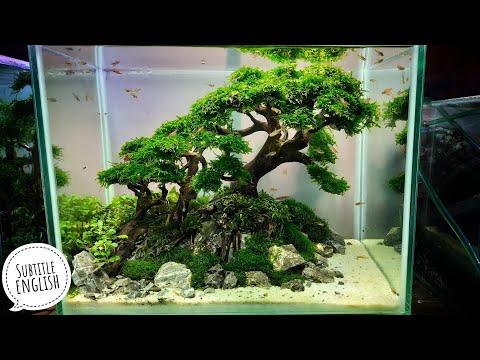 #165-membuat-aquascape-bonsai,mudah-dan-hemat-(subtitle-english)
