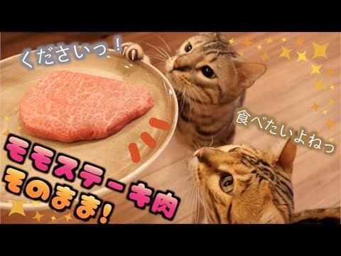 大好物の牛肉をステーキでまるごとあげたらロゼが日本語でねだってきた!!