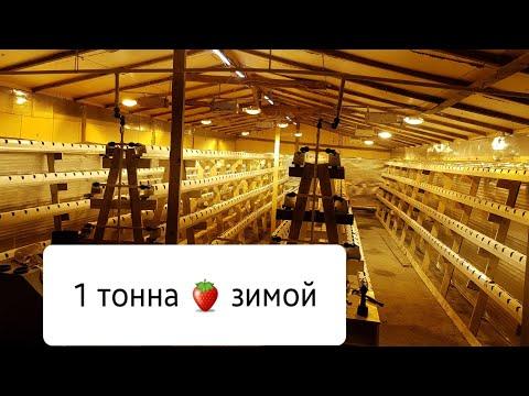 // ВЫРАЩИВАНИЕ КЛУБНИКИ ЗИМОЙ // Цель: 1 тонна ягоды ! ! !