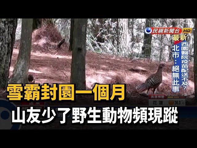 雪霸封園一個月 山友少了野生動物頻現蹤-民視台語新聞