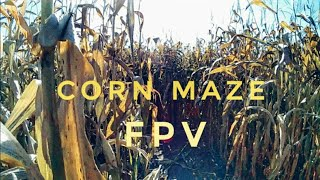 Corn Maze First Person View.