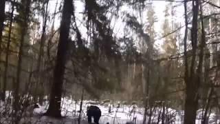 Охота на медведя. Погибли медведь и собака