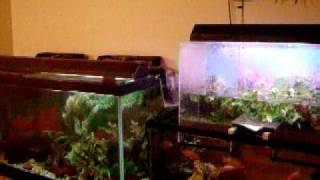 Connected Aquariums With Overflow, Upside Down Tank, Diy Build Project