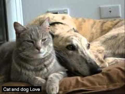 Video Cat And Dog Love Funny Cat And Dog Love Gif Hd Youtube