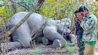 The Heroes in the wild - a mission to treat an injured wild elephant