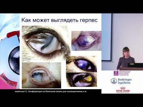 Гунина А. А. - Глазные поражения при герпесвирусной инфекции