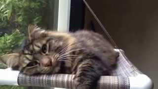 Kitty Cot™ - World's Best Cat Perch™ - Kittycot.com - #seiko The Cat