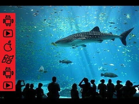 A Georgia Aquarium Tour Doovi