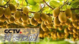 《我爱发明》 20190720 探花取粉| CCTV科教