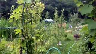 Tour Of Hilda's Organic Garden July 2014