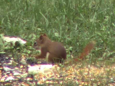 Warning Graphic Pest Control Video. Benjamin Armada 30 yard Open Sights