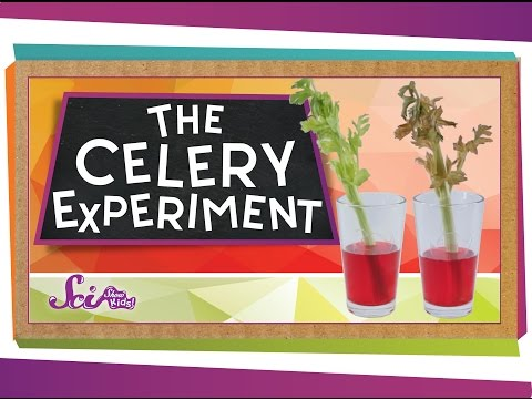 The Color-Changing Celery Experiment!