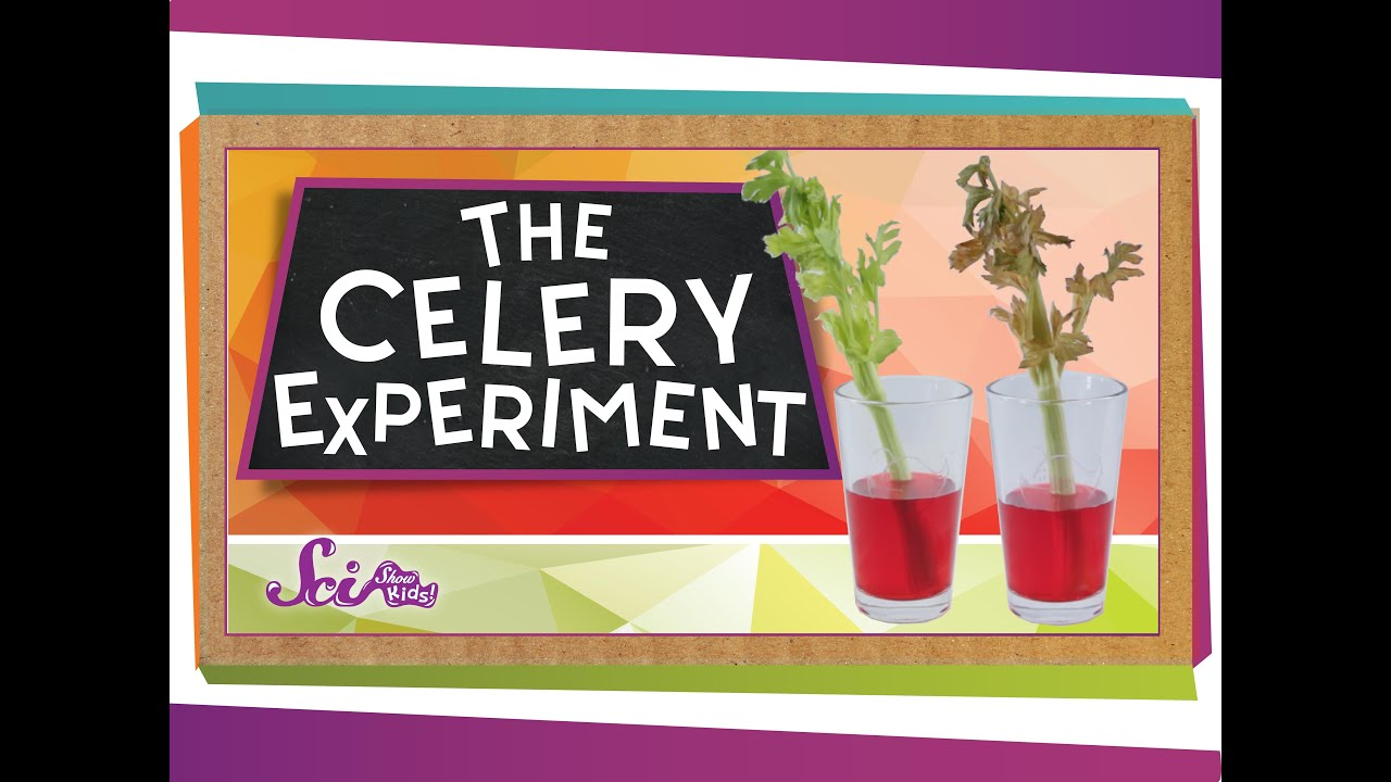 small resolution of The Color-Changing Celery Experiment! - YouTube
