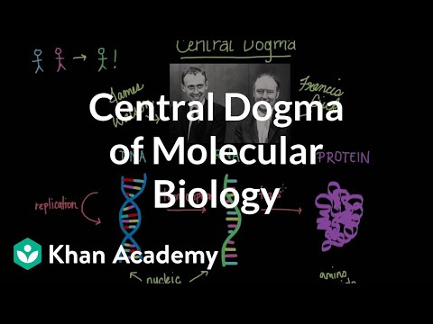 Central dogma of molecular biology | Chemical processes | MCAT | Khan Academy