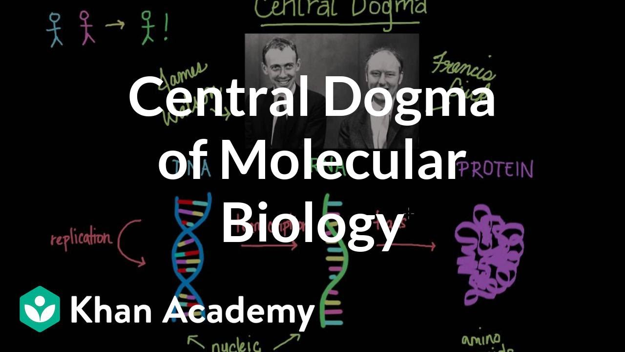 Central dogma of molecular biology (video) | Khan Academy