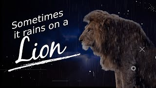 SOMETIMES IT RAINS ON A LION