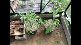 Growing Tomatoes in Hydroponics- Coco Coir-No Power or Pumps