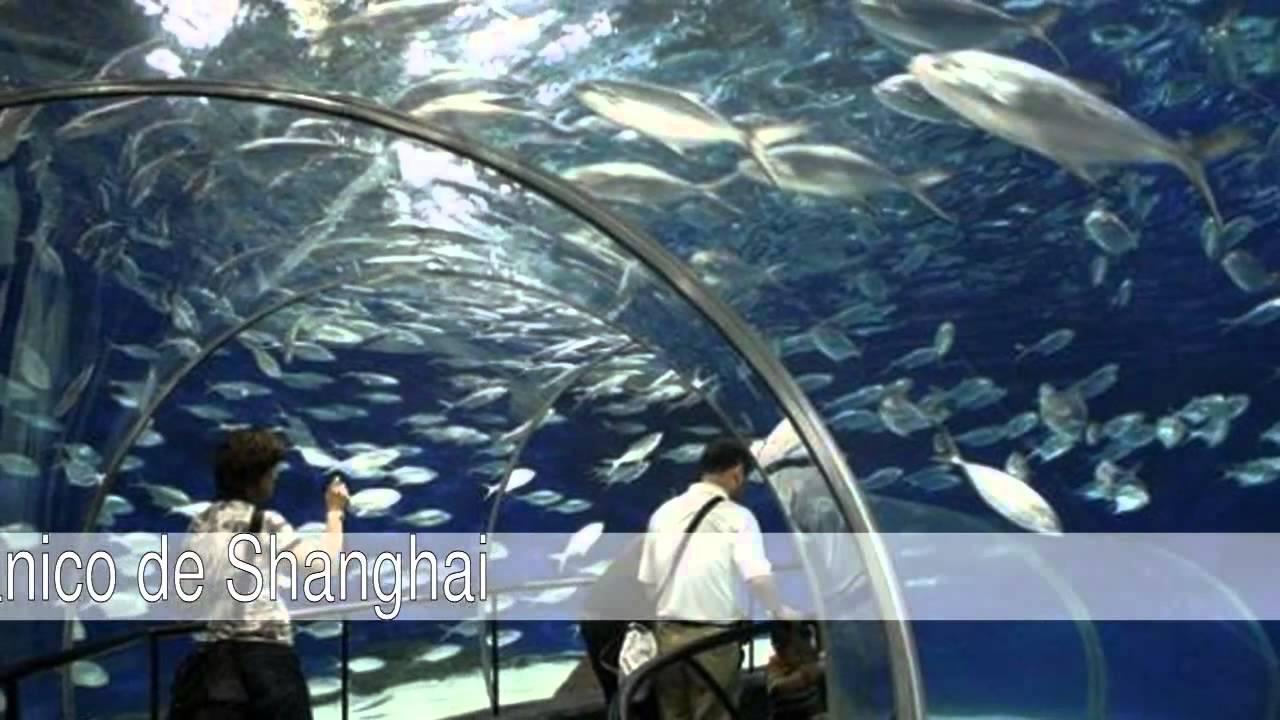 Los mejores acuarios del mundo viyoutube for Mejores peces para acuario
